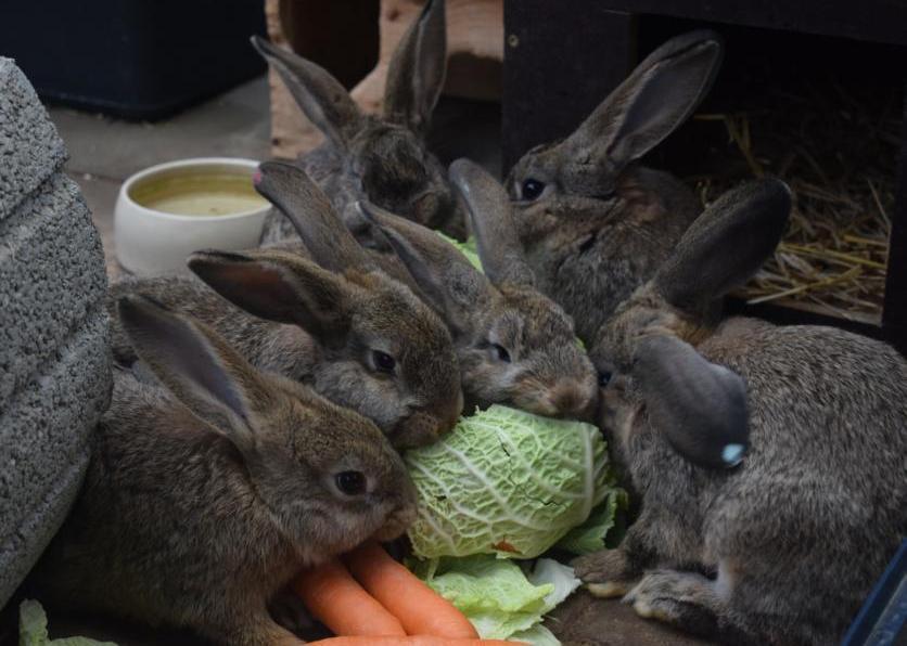 Kaninchenkinder