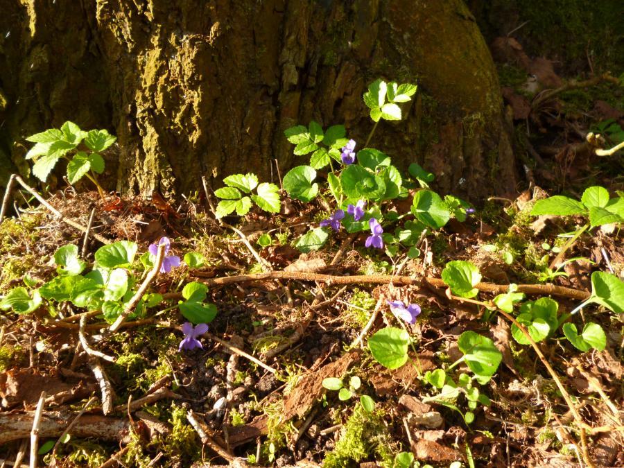 Frühling in Wabel