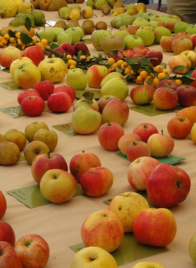 Apfelsortenausstellung LPV