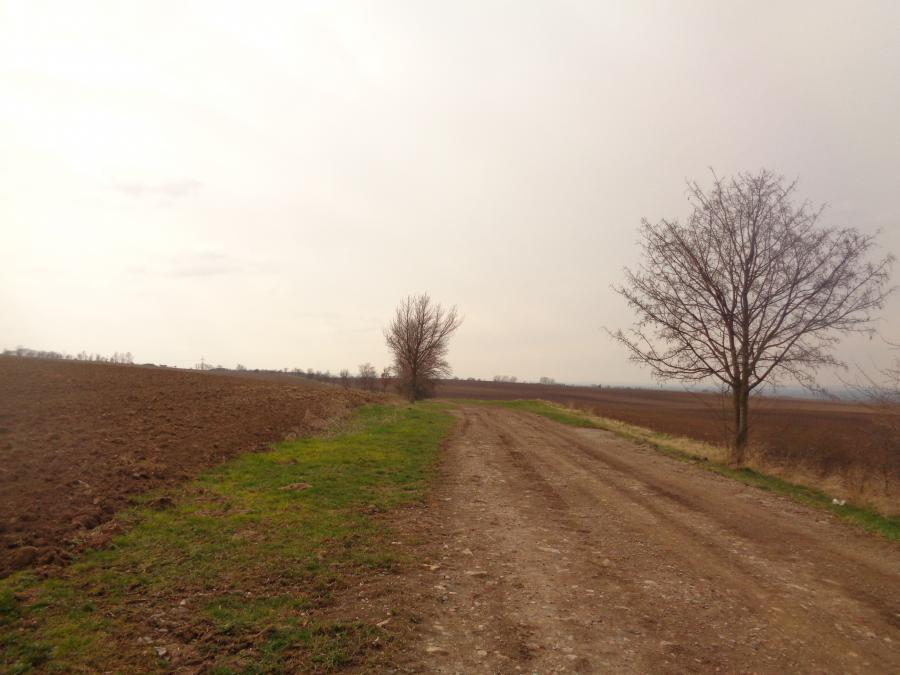 Baumpflanzung_Hottelstedt