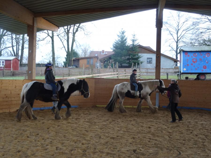 Preddöhl: Pferde