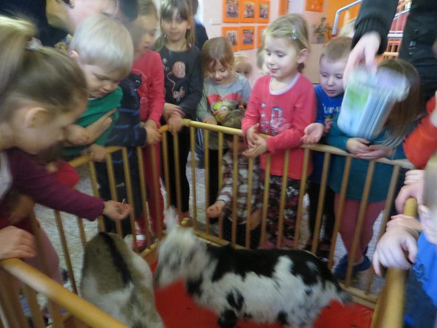 Besuch der Ziegen