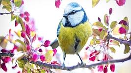 Vogel Blog Startseite