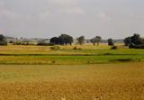 Landwirtschaftliche Weite