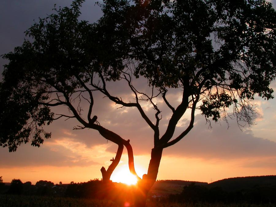 Jenseits von Afrika liegt das Fuldatal bei Reilos