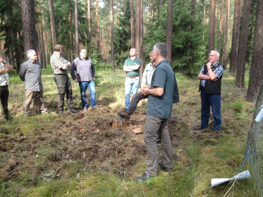 Treffen im Wald