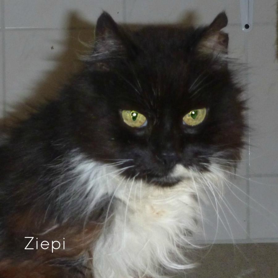 Ziepi (1995-2015)