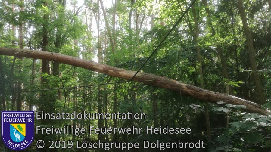 Einsatz 100/2019 | Kiefer in Telefonleitung | Dolgenbrodt Am Seekorso | 20.07.2019