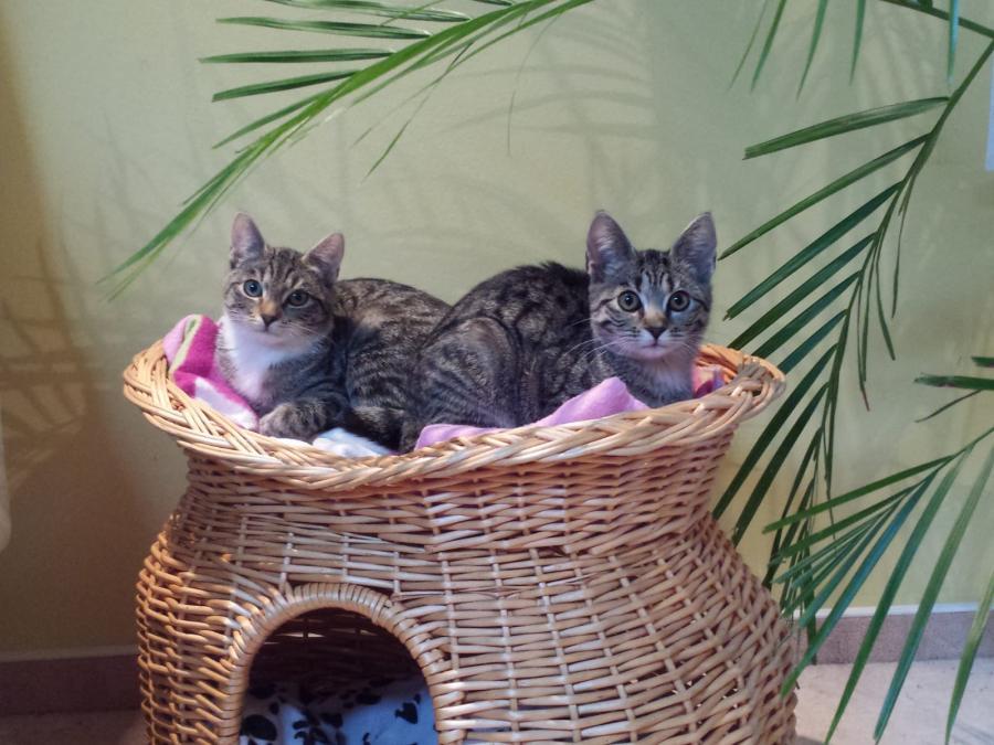 Katzenmädchen