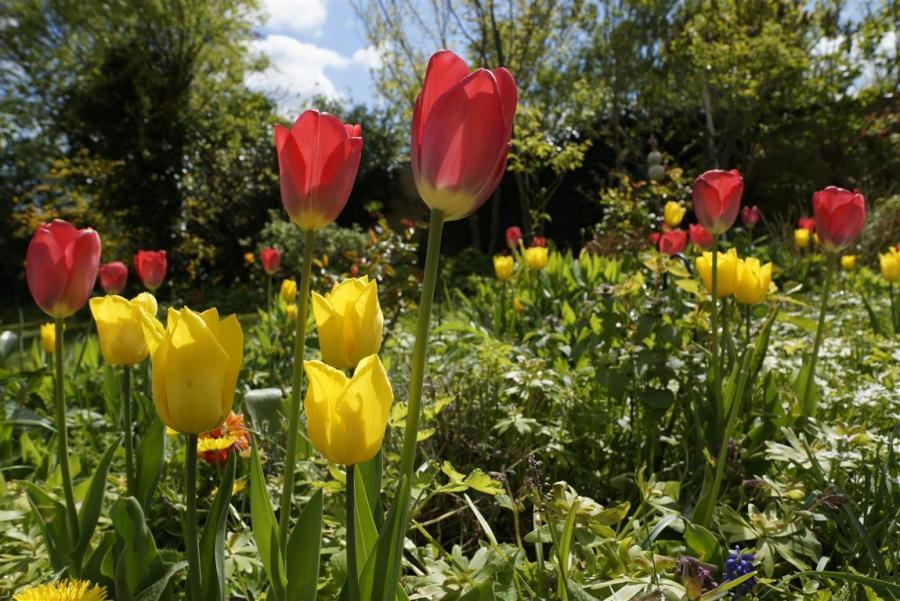 Frühlingserwachen in einem Sieversdorfer Vorgarten