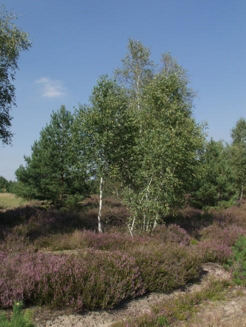 Glücksburger Heide