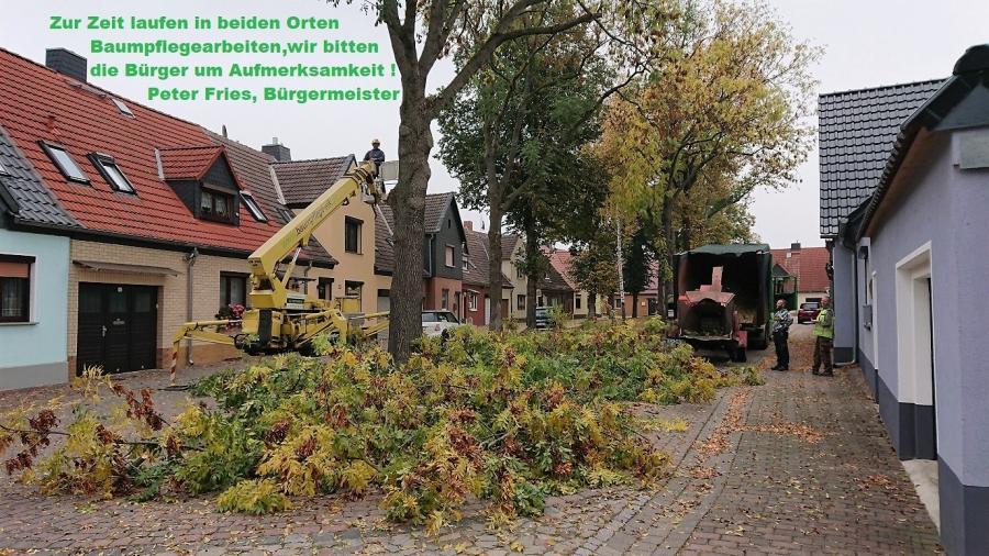 Baumpflegearbeiten Nov.2018