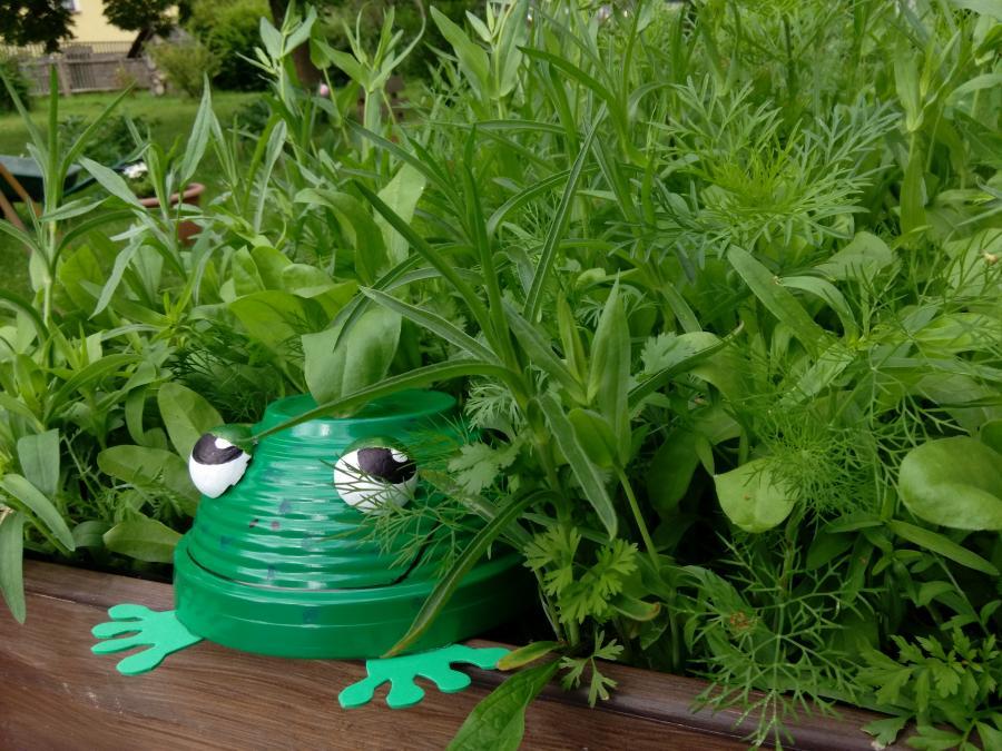 Unser Frosch im Garten!