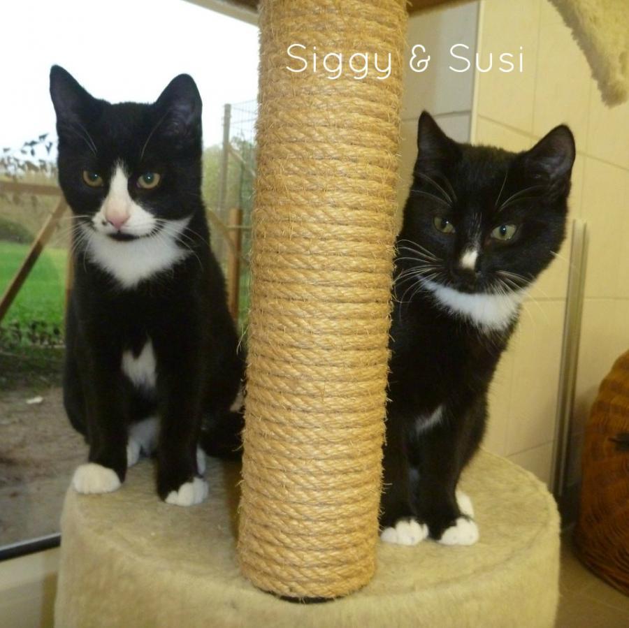 Siggi&Susi