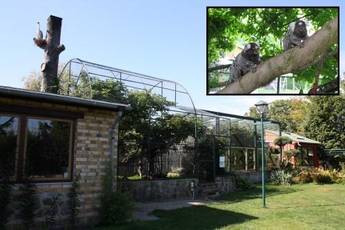Affengehege und Dschungelimbiss in Jocksdorf