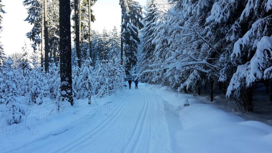Aktiv im Winterwald