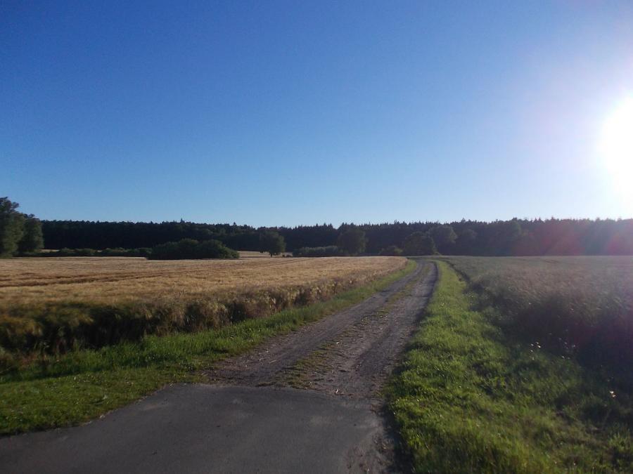 Felder und Wald bei Allerstorf