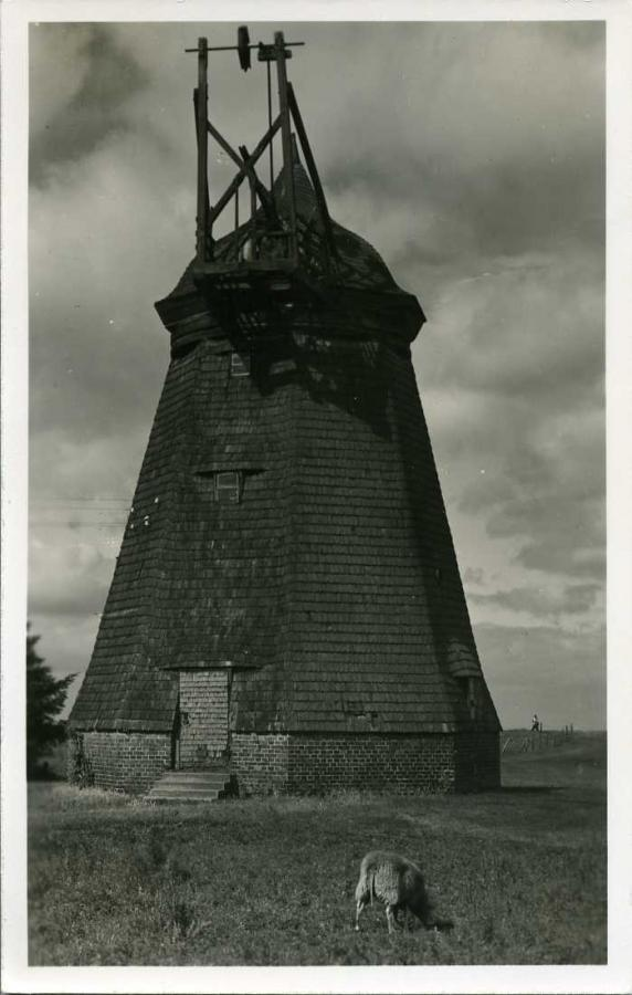 Die alte Mühle zu Vitte 1953