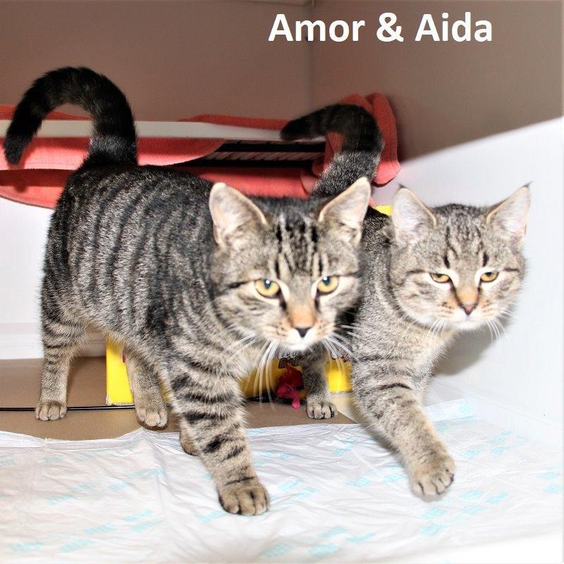 Amor & Aida