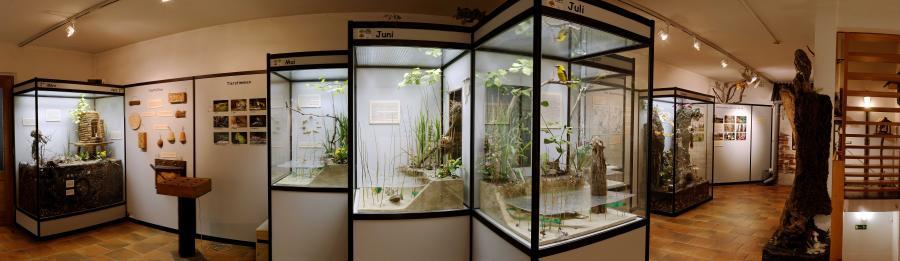 Ausstellung Naturkunde