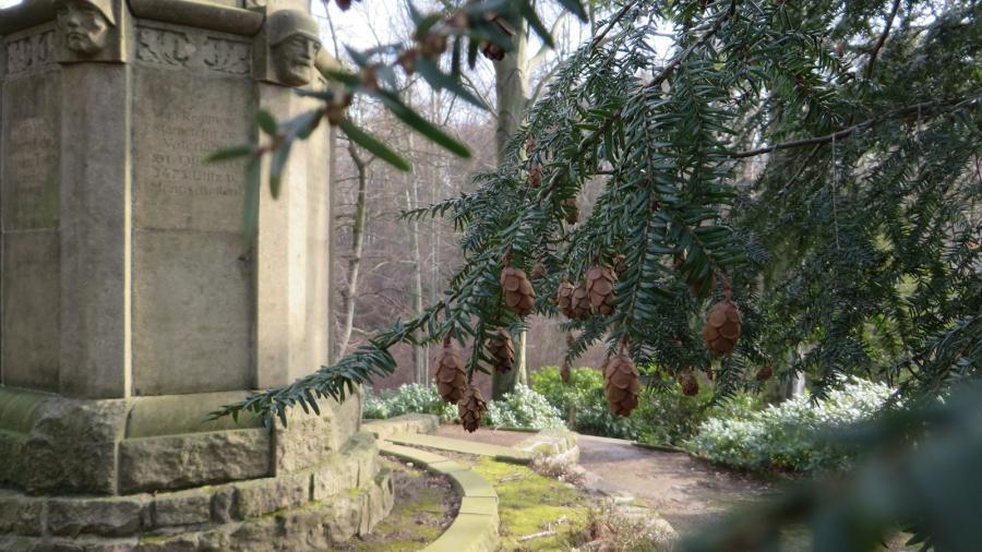 Hemlocktanne am Kriegerdenkmal