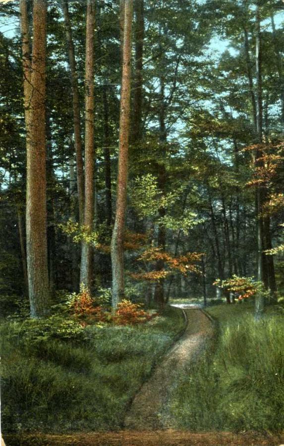 Baabe Waldpartie