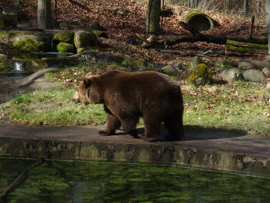 Bären nach Winterruhe