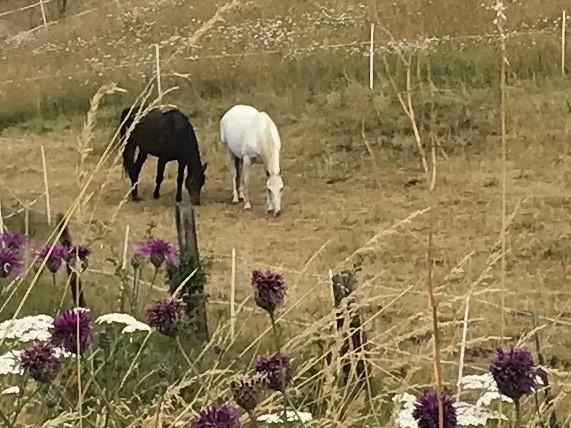 Pferde und Blumen