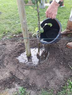 Baum bewässern