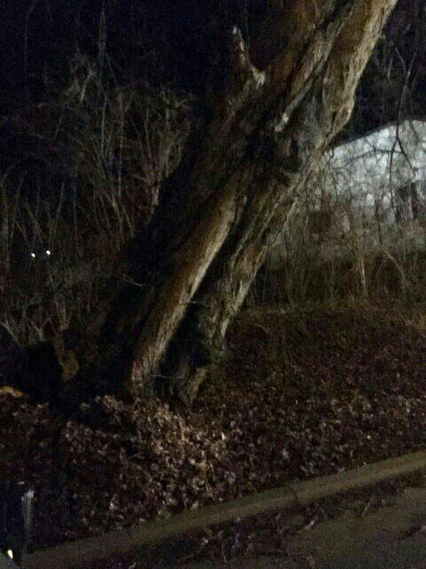 Baum droht umzustürzen 10.1.15