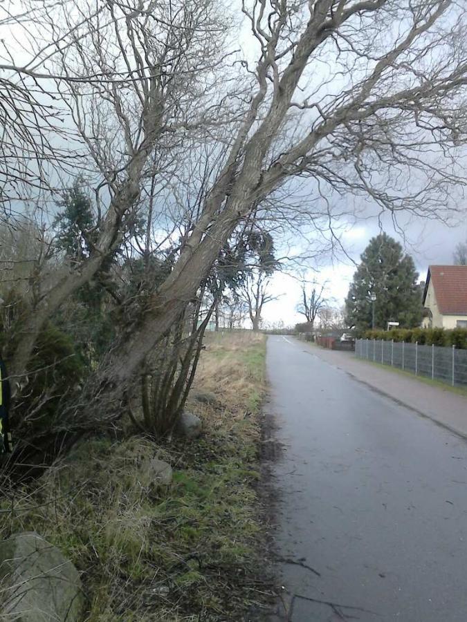 Baum droht umzustürzen 14.01.15