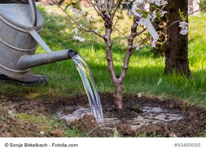 Baum gießen