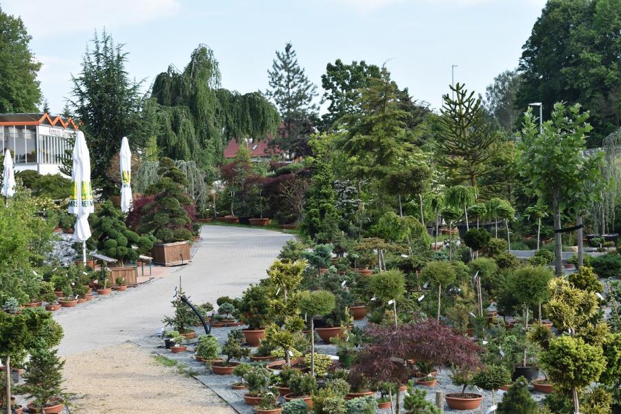 Mammutgarten 4