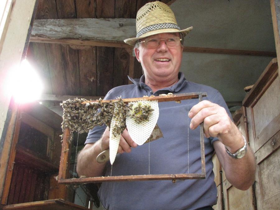 Herr Neumannn Imker aus Plau leistet in Augzin Pionierarbeit beim aufbau der Bienenzucht  Foto J. Gössling