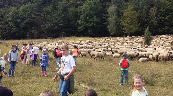 Begegnung mit einer Schafherde
