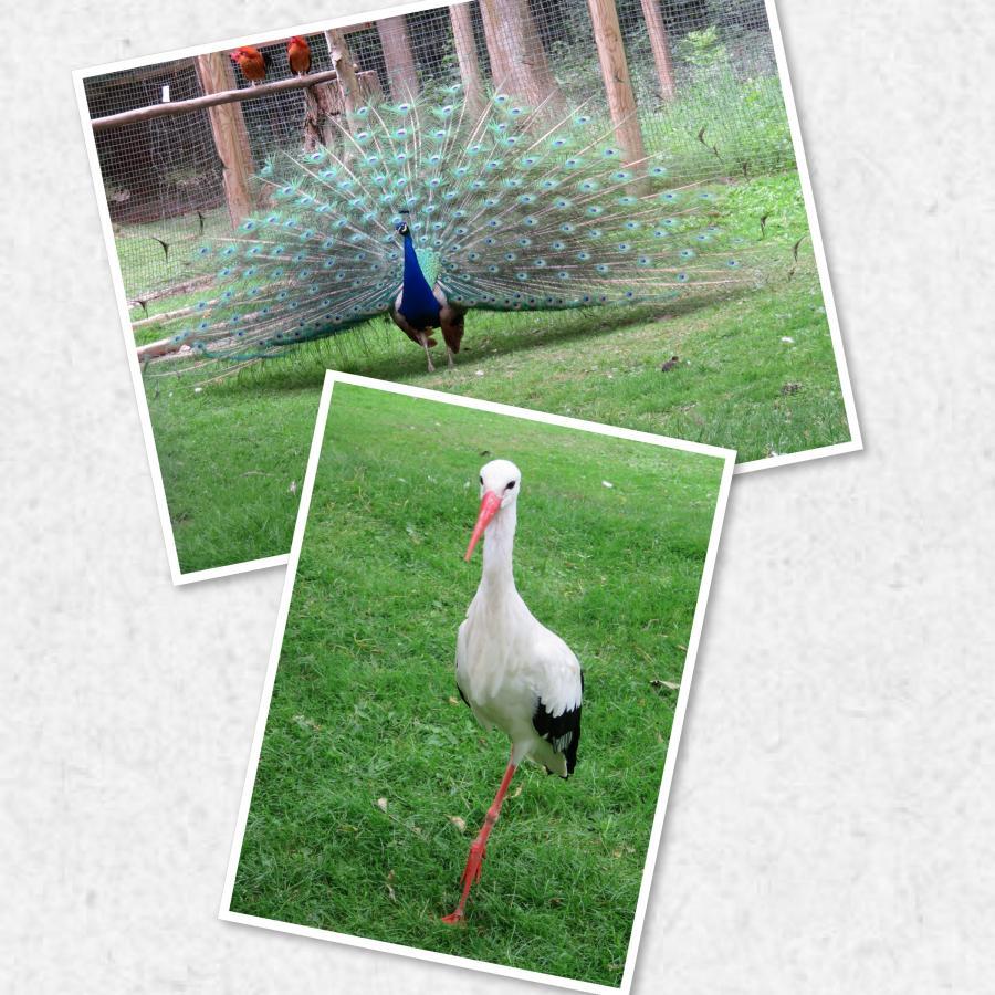 Die Vögel zeigen sich von ihrer schönsten Seite