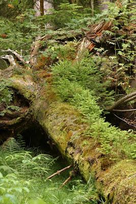Biotop2012 Das Totholz / Foto: NABU Tino Westphal