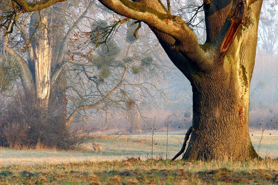 Biotop2015 Alte Bäume / Foto: NABU-Seeheim