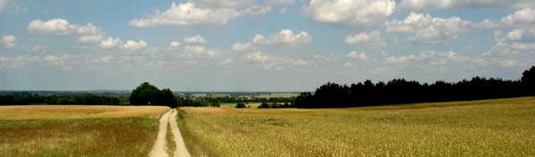 Blick aus der Dübener Heide in das Elbtal