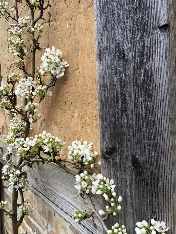 Blüten Scheune