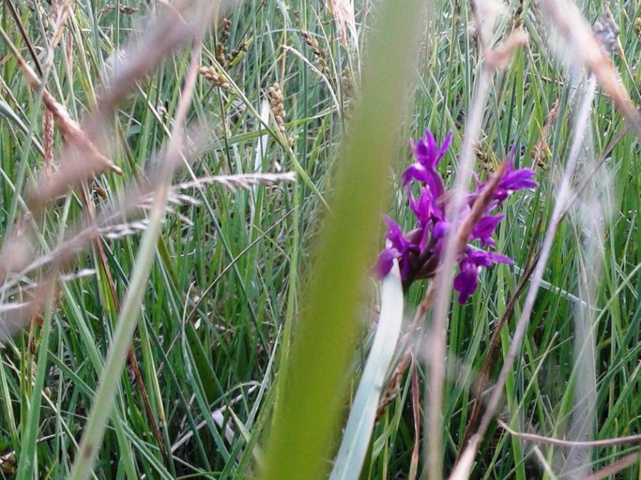 Blüte im Gras