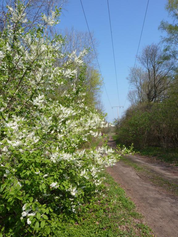 Radweg2