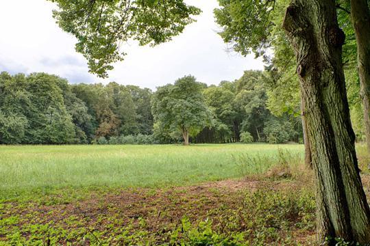 Hirschfelde im Park 1