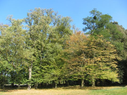Hirschfelde im Park 3