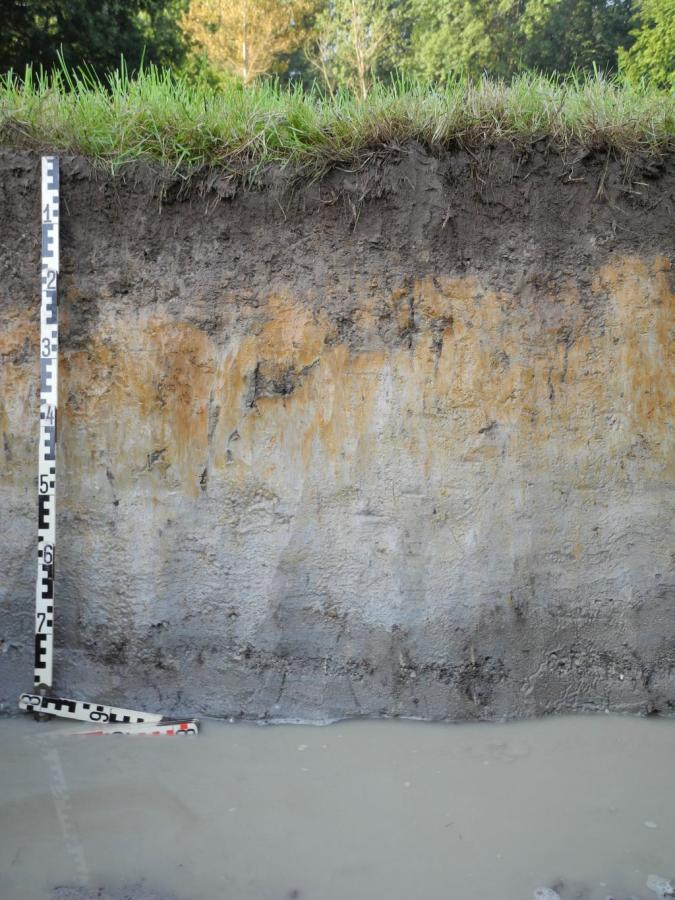 Boden2016 Grundwasserboden / Foto: M. Dworschak (Geologischer Dienst NRW)