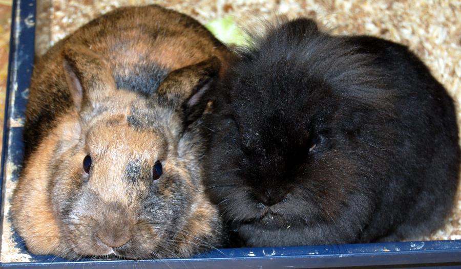 Bonnie und böcki
