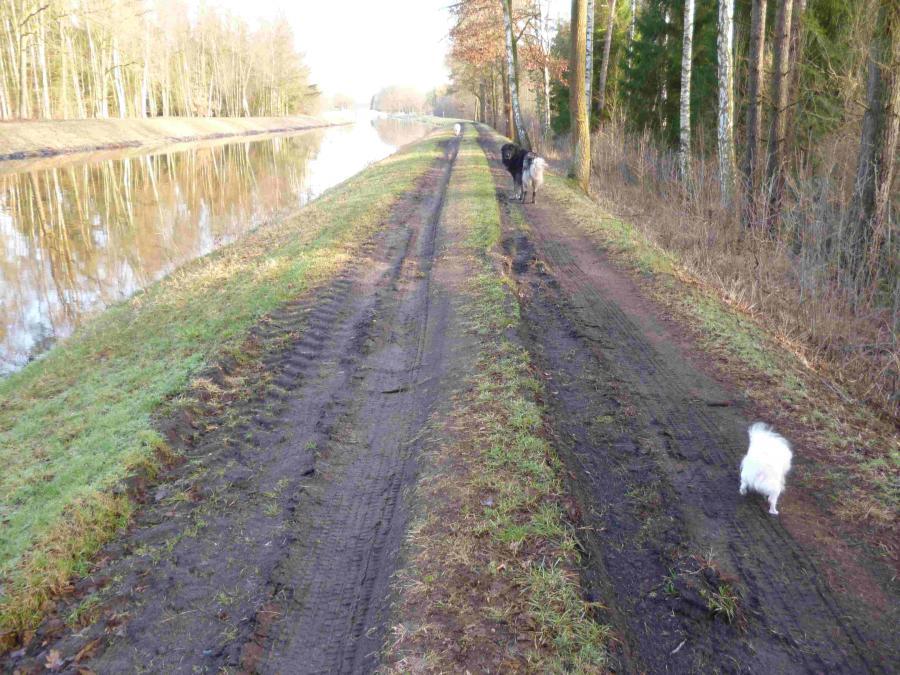 Schäden an der Uferbefestiigung wegen Befahren mit Harvestern, etc.
