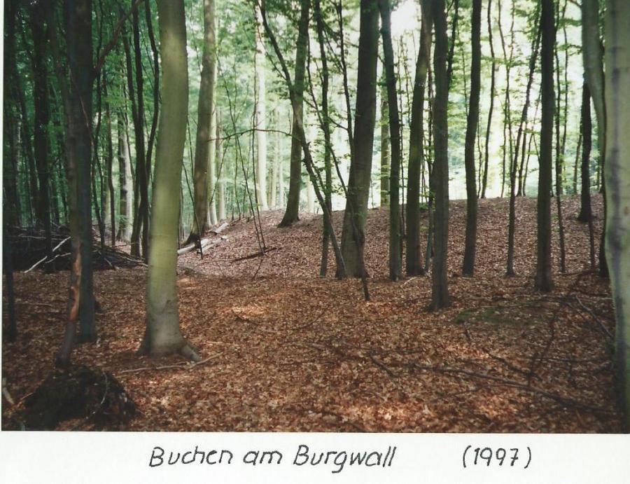 Buchen am Burgwall