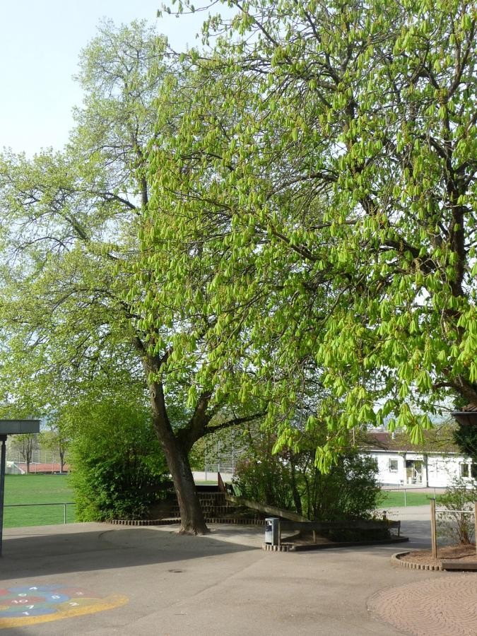 Baum April