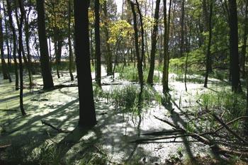 Durchflutbereich im wiederbelebten Feuchtbiotop nordöstlich der Siedlung Schulz